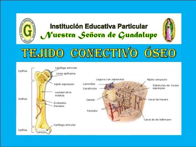V - Unidad : Biología TEMA: CLASIFICACIÓN DEL TEJIDO CONECTIVO I.E.P «Nuestra Señora de Guadalupe» Es uno de los tejidos m...