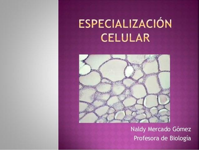 Naldy Mercado Gómez Profesora de Biología