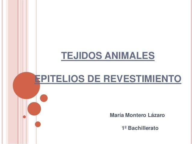 TEJIDOS ANIMALES EPITELIOS DE REVESTIMIENTO  María Montero Lázaro 1º Bachillerato