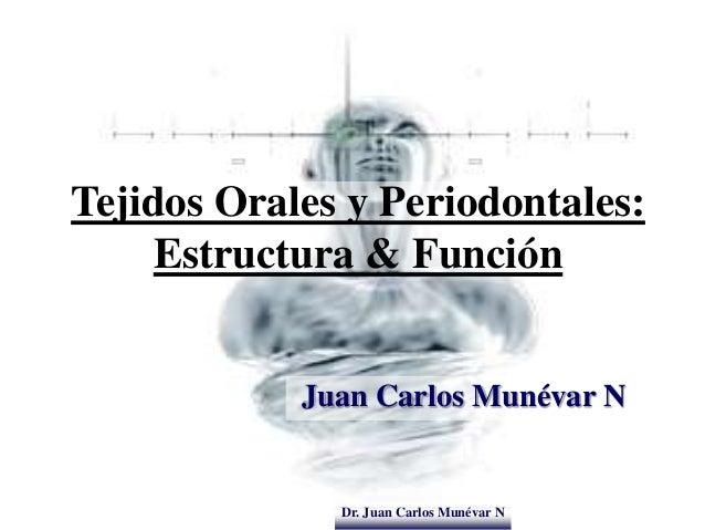Dr. Juan Carlos Munévar N Tejidos Orales y Periodontales: Estructura & Función Juan Carlos Munévar N