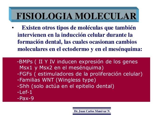 Dr. Juan Carlos Munévar N • Existen otros tipos de moléculas que también intervienen en la inducción celular durante la fo...
