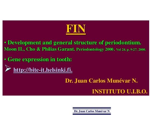 Dr. Juan Carlos Munévar N FIN • Development and general structure of periodontium. Moon IL, Cho & Philias Garant. Periodon...