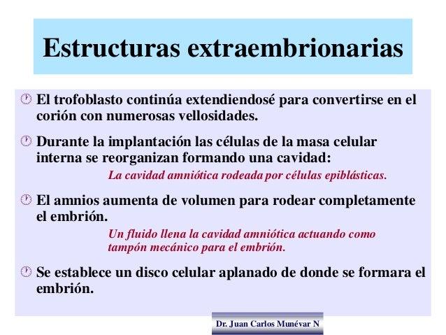 Dr. Juan Carlos Munévar N Estructuras extraembrionarias  El trofoblasto continúa extendiendosé para convertirse en el cor...