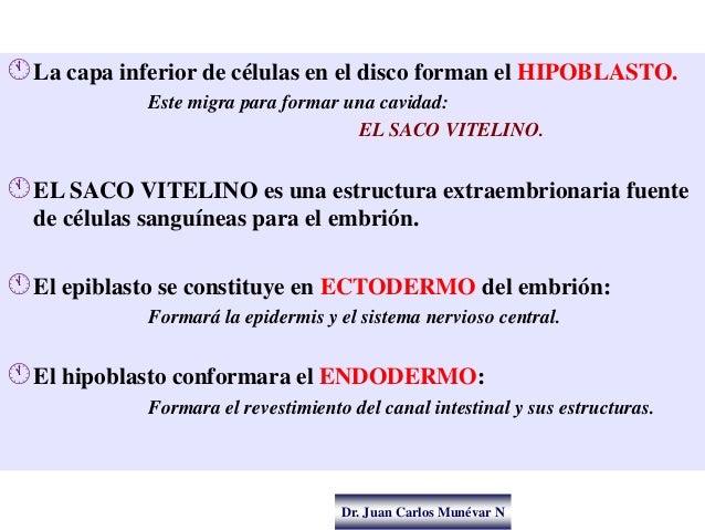 Dr. Juan Carlos Munévar N La capa inferior de células en el disco forman el HIPOBLASTO. Este migra para formar una cavida...