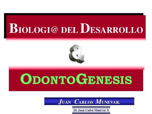 Dr. Juan Carlos Munévar N BIOLOGI@ DEL DESARROLLO ODONTOGENESIS JUAN CARLOS MUNEVAR.