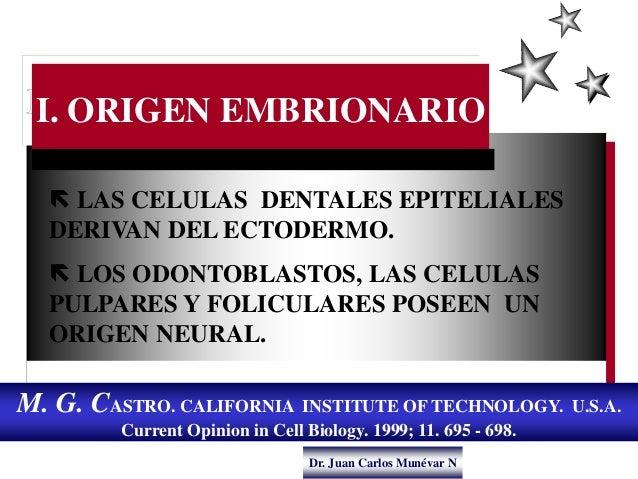 Dr. Juan Carlos Munévar N I. ORIGEN EMBRIONARIO  LAS CELULAS DENTALES EPITELIALES DERIVAN DEL ECTODERMO.  LOS ODONTOBLAS...