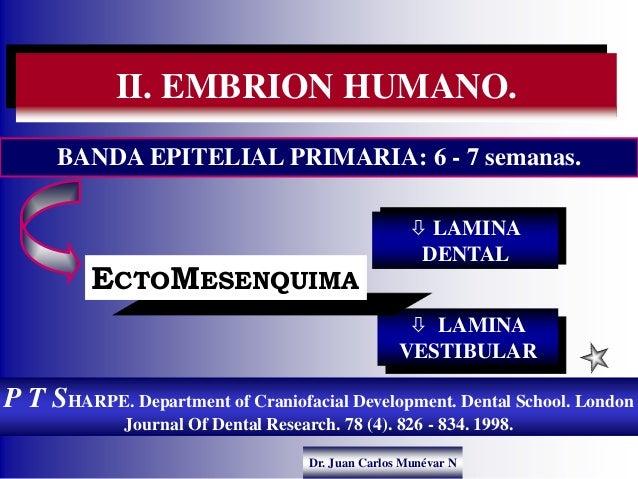 Dr. Juan Carlos Munévar N P T SHARPE. Department of Craniofacial Development. Dental School. London Journal Of Dental Rese...