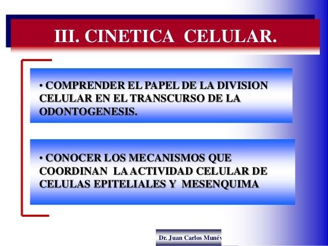 Dr. Juan Carlos Munévar N III. CINETICA CELULAR. • COMPRENDER EL PAPEL DE LA DIVISION CELULAR EN EL TRANSCURSO DE LA ODONT...