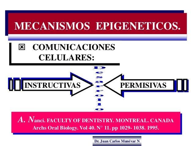 Dr. Juan Carlos Munévar N MECANISMOS EPIGENETICOS.  COMUNICACIONES CELULARES: A. Nanci. FACULTY OF DENTISTRY. MONTREAL. C...