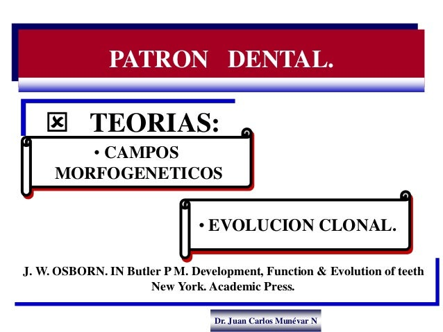 Dr. Juan Carlos Munévar N PATRON DENTAL.  TEORIAS: J. W. OSBORN. IN Butler P M. Development, Function & Evolution of teet...