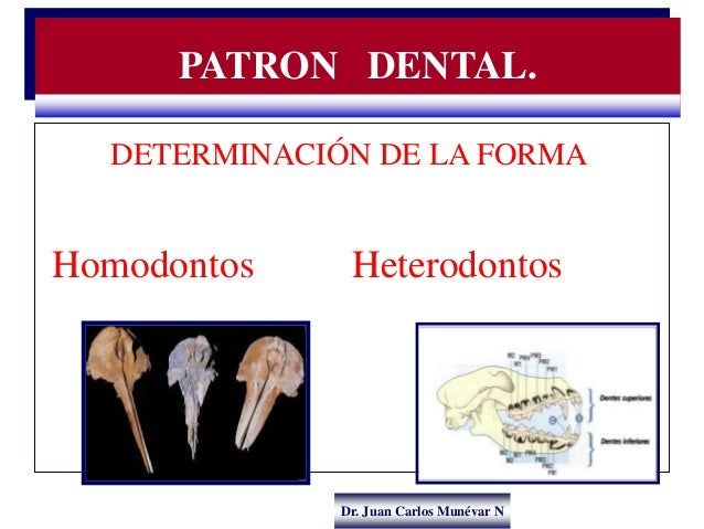 Dr. Juan Carlos Munévar N DETERMINACIÓN DE LA FORMA Homodontos Heterodontos PATRON DENTAL.