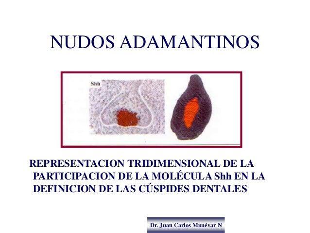 Dr. Juan Carlos Munévar N NUDOS ADAMANTINOS REPRESENTACION TRIDIMENSIONAL DE LA PARTICIPACION DE LA MOLÉCULA Shh EN LA DEF...