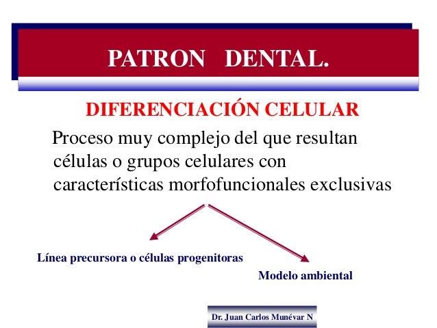 Dr. Juan Carlos Munévar N DIFERENCIACIÓN CELULAR Proceso muy complejo del que resultan células o grupos celulares con cara...