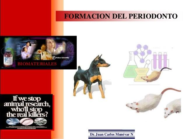 Dr. Juan Carlos Munévar N FORMACION DEL PERIODONTO BIOMATERIALES