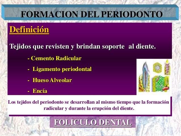 Dr. Juan Carlos Munévar N FORMACION DEL PERIODONTO Definición Tejidos que revisten y brindan soporte al diente. - Cemento ...