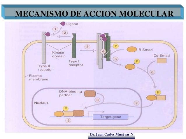 Dr. Juan Carlos Munévar N MECANISMO DE ACCION MOLECULAR