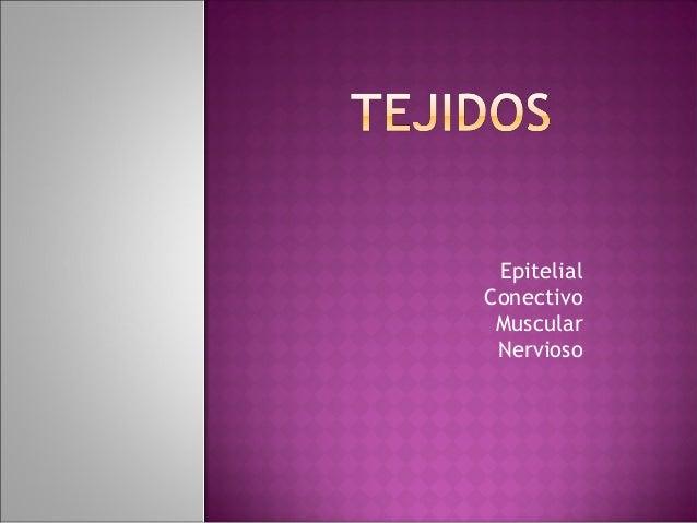 EpitelialConectivo Muscular Nervioso