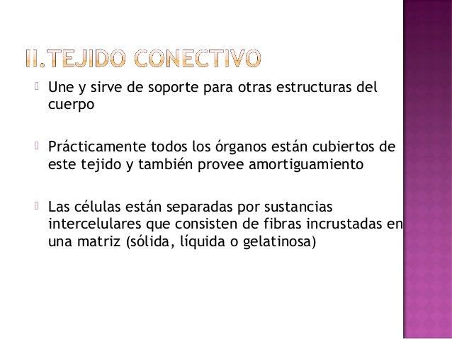    T.C. Suelto y Denso:     Para   conectar órganos y        servir de reserva de sales y        fluidos   T.C. Elástic...