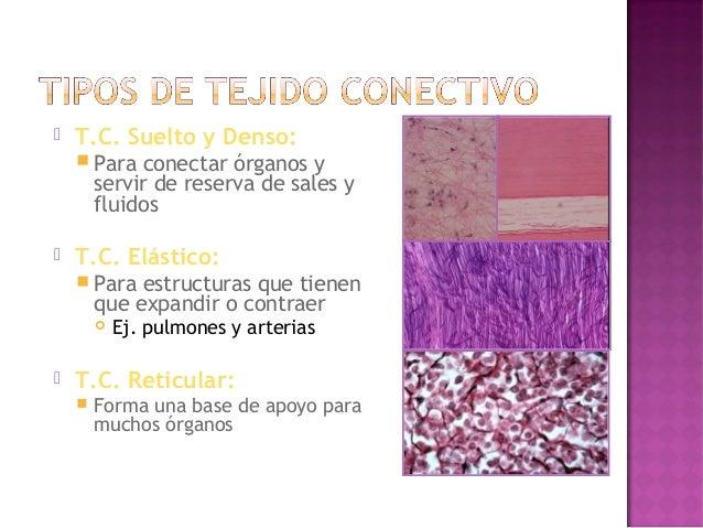    Tejido Adiposo:       Almacenar grasa   Sangre y Linfa:       Tejido de circulación que provee        comunicación ...