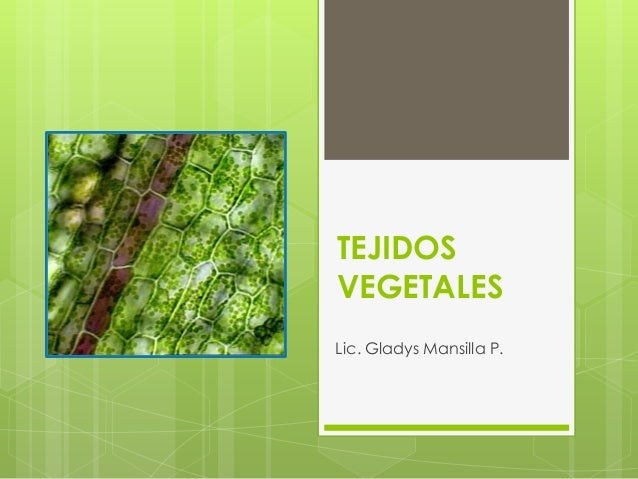 TEJIDOSVEGETALESLic. Gladys Mansilla P.