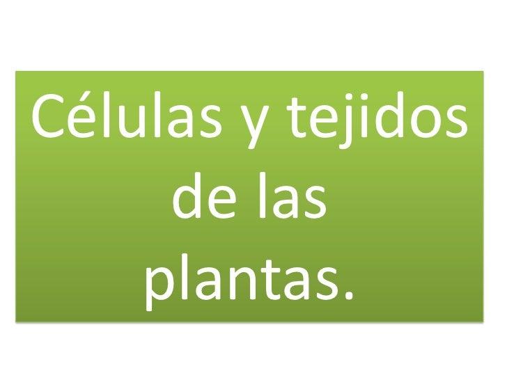 Células y tejidos     de las    plantas.