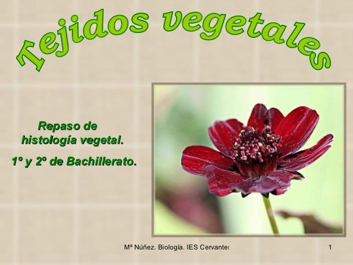 Tejidos vegetales Repaso de  Histología vegetal para 1º y 2º de Bachillerato.