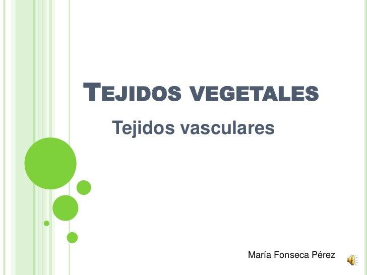 TEJIDOS VEGETALES  Tejidos vasculares                 María Fonseca Pérez