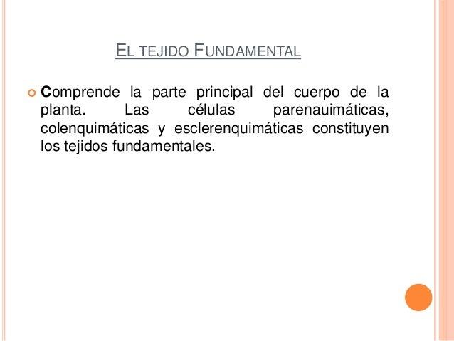 EL TEJIDO FUNDAMENTAL Comprende la parte principal del cuerpo de laplanta. Las células parenauimáticas,colenquimáticas y ...
