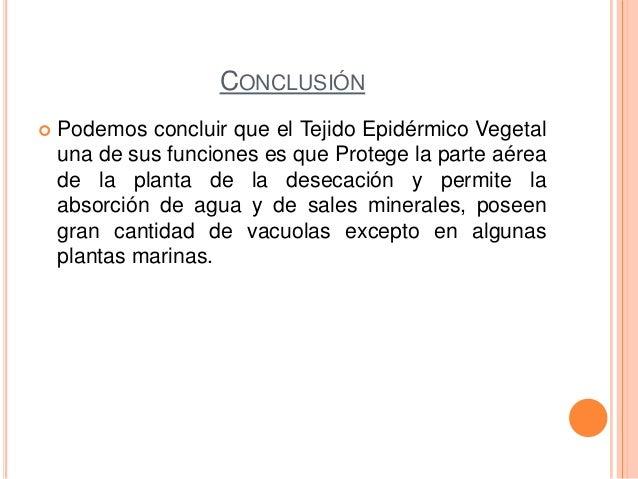 CONCLUSIÓN Podemos concluir que el Tejido Epidérmico Vegetaluna de sus funciones es que Protege la parte aéreade la plant...