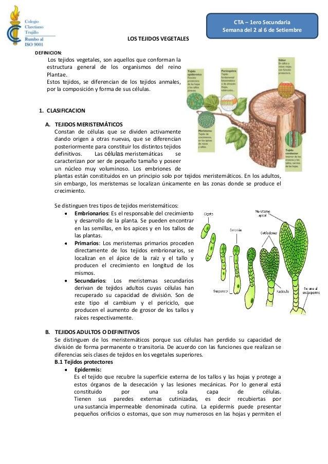 12 al 16 de Agosto LOS TEJIDOS VEGETALES DEFINICION: Los tejidos vegetales, son aquellos que conforman la estructura gener...