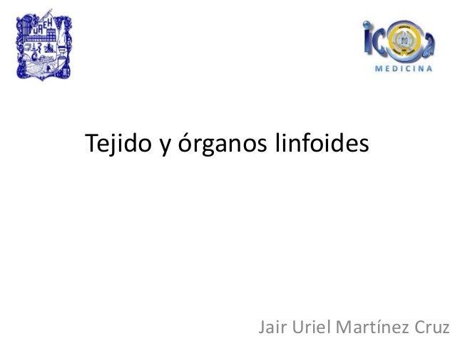 Tejido y órganos linfoides Jair Uriel Martínez Cruz