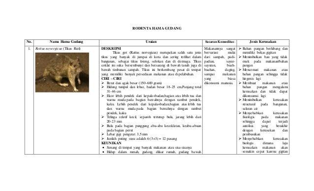 Contoh Deskripsi Tentang Jerapah dalam Bahasa Inggris dan Artinya
