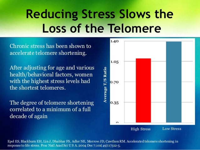 Image result for shortened telomeres stress