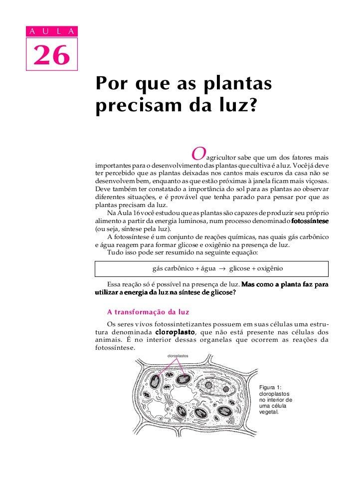 A UA U L A     L A    2626             Por que as plantas             precisam da luz?                                    ...