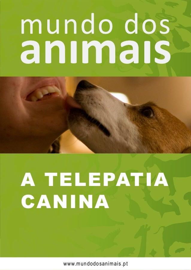 A TELEPATIA CANINA www.mundodosanimais.pt