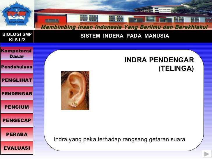 INDRA PENDENGAR (TELINGA) Indra yang peka terhadap rangsang getaran suara Membimbing Insan  Indonesia  Yang Berilmu dan Be...