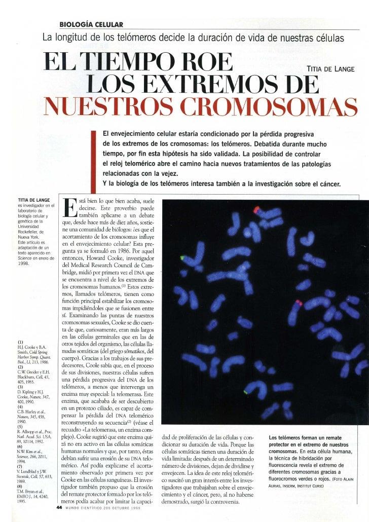 El tiempo roe los extremos de los cromosomas