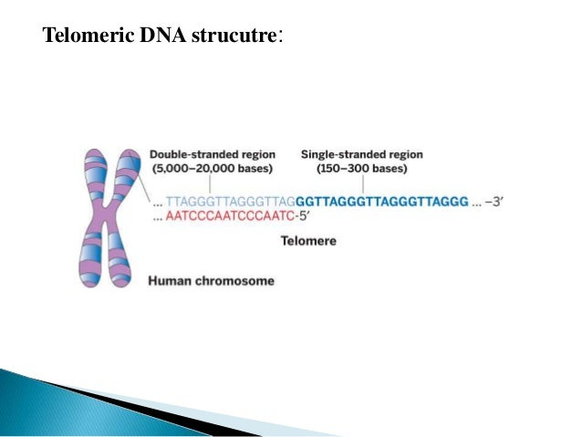 15 AN OVERVIEW OF TELOMERE CHEMISTRY.