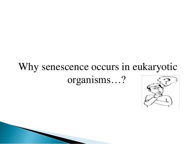 Why senescence occurs in eukaryotic organisms…?