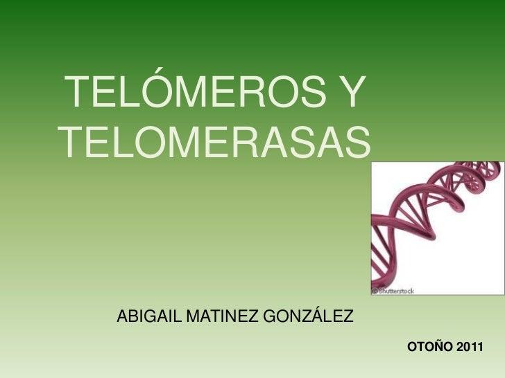 TELÓMEROS YTELOMERASAS  ABIGAIL MATINEZ GONZÁLEZ                             OTOÑO 2011