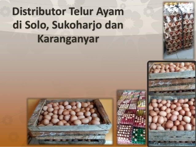 Distributor Telur Ayam di Solo, Sukoharjo dan Karanganyar