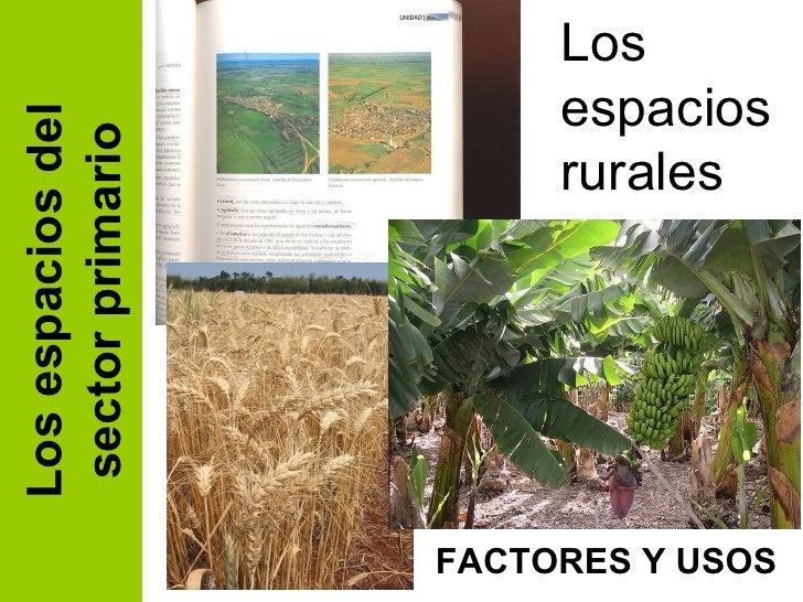 Los espacios del sector primario Los espacios rurales FACTORES Y USOS