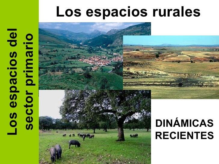 Los espacios del sector primario Los espacios rurales DINÁMICAS RECIENTES