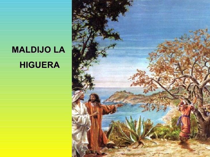 MALDIJO LA  HIGUERA
