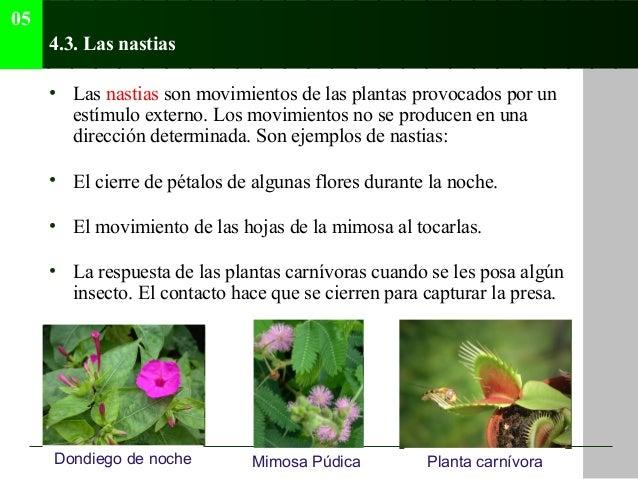 Tema 05 relaci n coordinaci n y adaptaci n en animales y for Cuales son los tipos de plantas