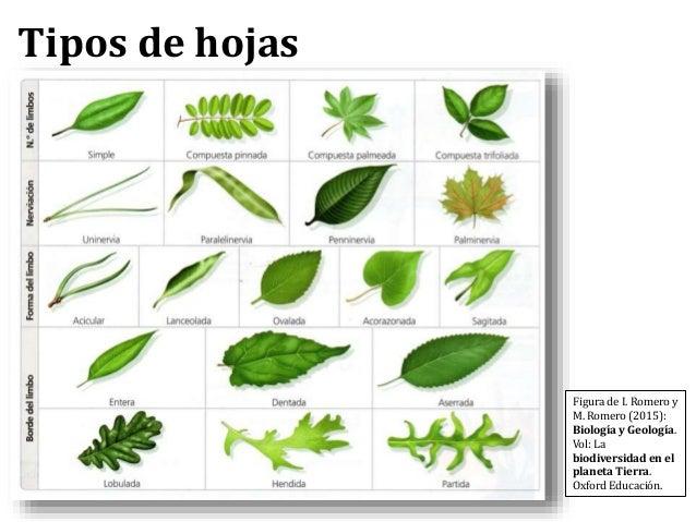 Tema08 Plantas