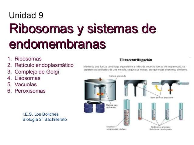 Unidad 9  Ribosomas y sistemas de endomembranas 1. 2. 3. 4. 5. 6.  Ribosomas Retículo endoplasmático Complejo de Golgi Lis...