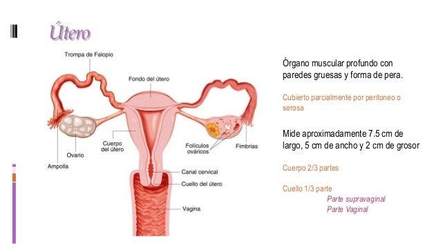 Ginecología - anatomía y fisiología del aparato reproductor femenino