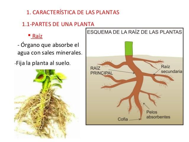 Quinto curso. Ciencias Naturales. Tema 1. Las plantas. Slide 2