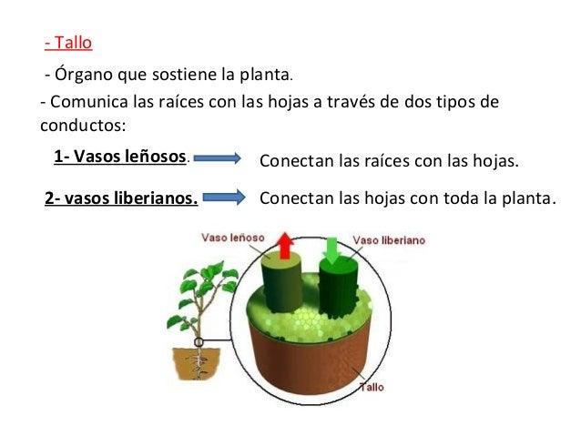 Quinto curso. Ciencias Naturales. Tema 1. Las plantas. Slide 3